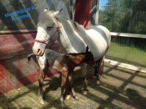 Merrylegs had a baby!